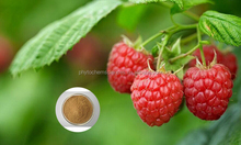 Best Sales pure natural Raspberry Extract 4:1