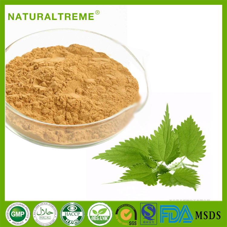 New Products stinging nettle brown yellow in herbal powder