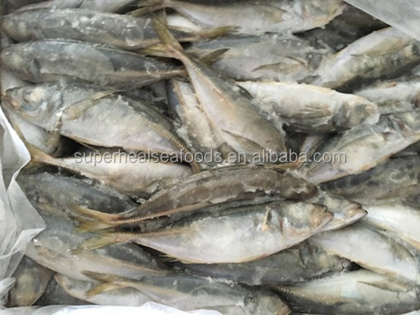 Chinese Hot Sale Seafood Frozen Horse Mackerel Fresh Fish