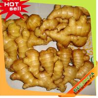 NEW Fresh China Wholesale buyer of dry ginger