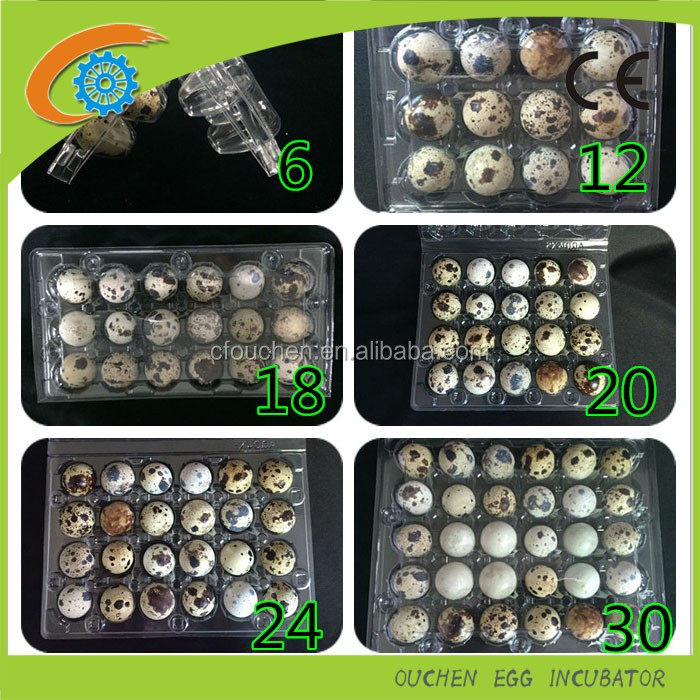Custom Plastic clear Egg Trays & Containers 30 quail egg crate