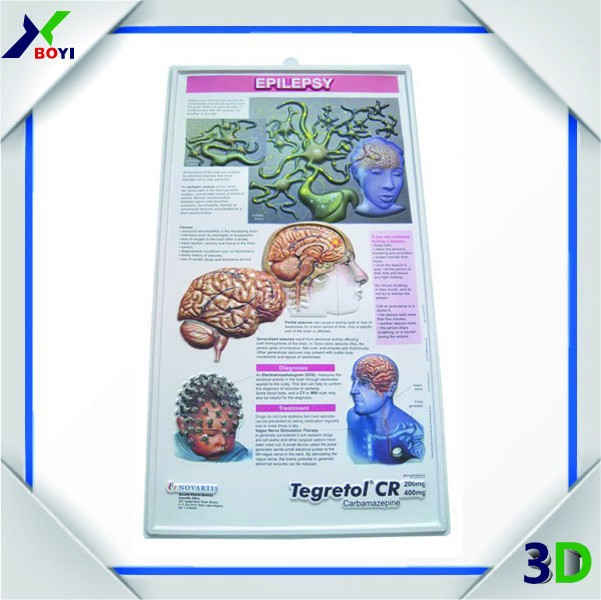 2015 3D Anatomical Wall Chart Manufacturer