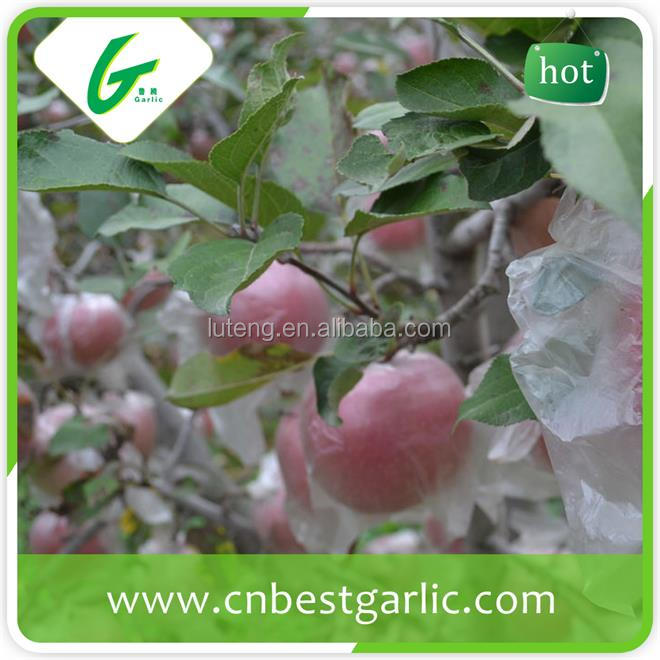 New crop fresh fuji apples for sale