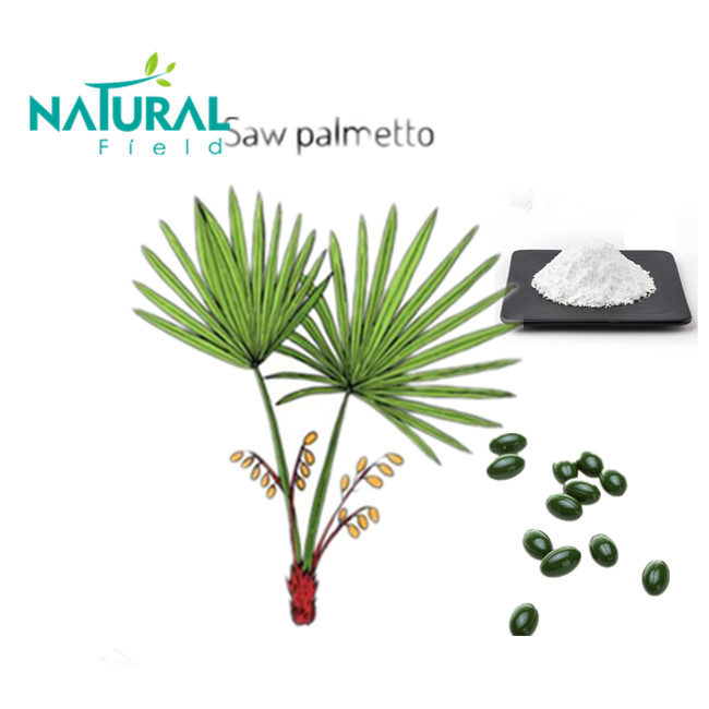 100% Pure Natural Saw Palmetto Extract Fatty Acid from Natural Field