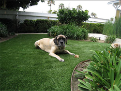Friendly artificial grass for residential indoor roofing balcony models dog/pet/garden decoration