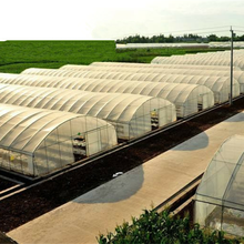 PE Plastic Large Tunnel Greenhouse For Agriculture /Vegatables