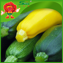 IQF Frozen Zucchini Ready for Export Top Quality fresh zucchini