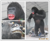 /product-detail/kids-attraction-animated-life-size-kingkong-60713894079.html