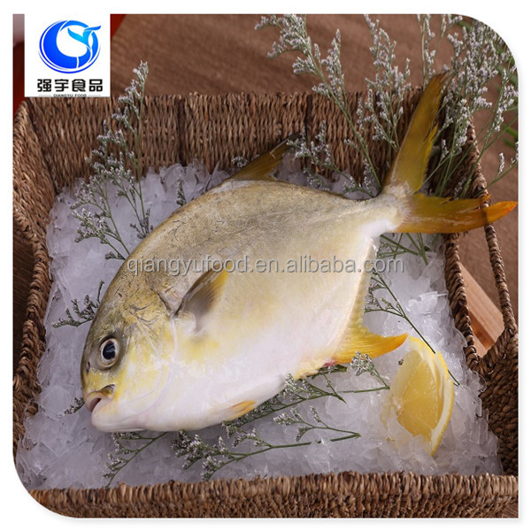 Frozen Fish Export Seafood Farm Raised Frozen Golden Pompano Fish