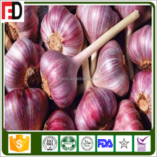 Export Middle East red skin garlic