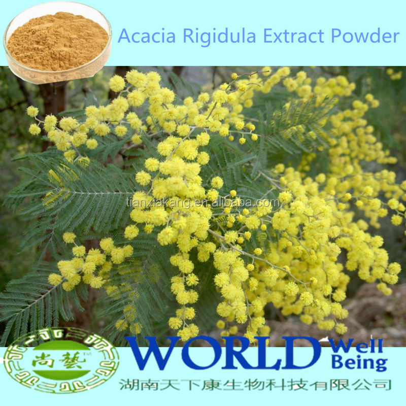 100% Natural Acacia Rigidula Powder,Acacia Rigidula Extract,Acacia Bark Extract Powder