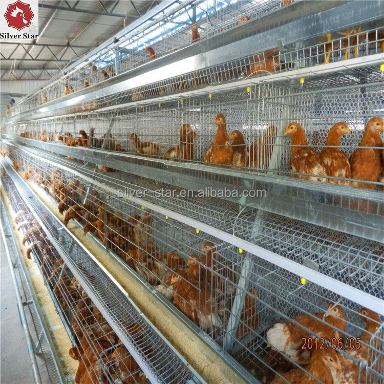 Design Layer Chicken Cages for Kenya poultry farm/sheds