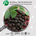 100% Pure Powder Mulberry Fruit Juice Powder