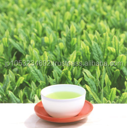High quality and healthy Japanese organic products tea