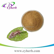 Great quality Butterbur extract 8%/15% Petasitin petasin powder