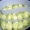 Best Wholesale Selling Fresh White Roses