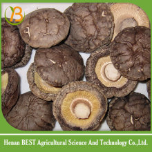 high quality bulk dried mushrooms /dry shiitake mushroom