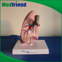 MFM024 Hot Sale Top Quality Best Price Model Of Lung Price