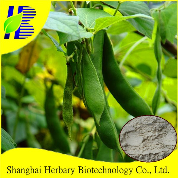 Natural white kidney bean extract, nautral alpha-amylase inhibitor Phaseolin for normal range blood sugar