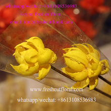 Supplying Rose Petals Organic Dried Edible Flowers From Online Shop