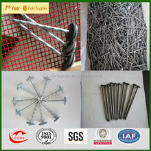 high quality common nails price/common round wire nails