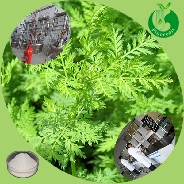 High quality artemisia annua extract natural artemisinin plant extract