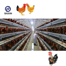 Professional Egg Laying Chicken Breeding Coop Cage
