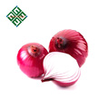 50mm size fresh red onions in bulk