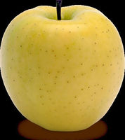 Golden Delicious Apples Fresh Pack Washington USA