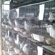 pigeons cages