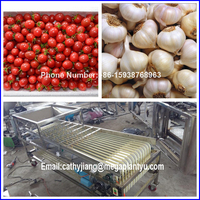 dates grading machine and dates sorting machine