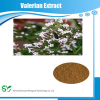 Natural valerian root extract powder / 10:1 Valeriana officinalis Extract