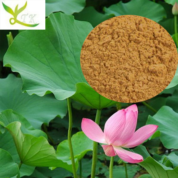 Weight loss Pure Natural Nuciferine Lotus Leaf Extract 2%