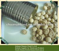 Button Mushroom Canned Food Manufacture