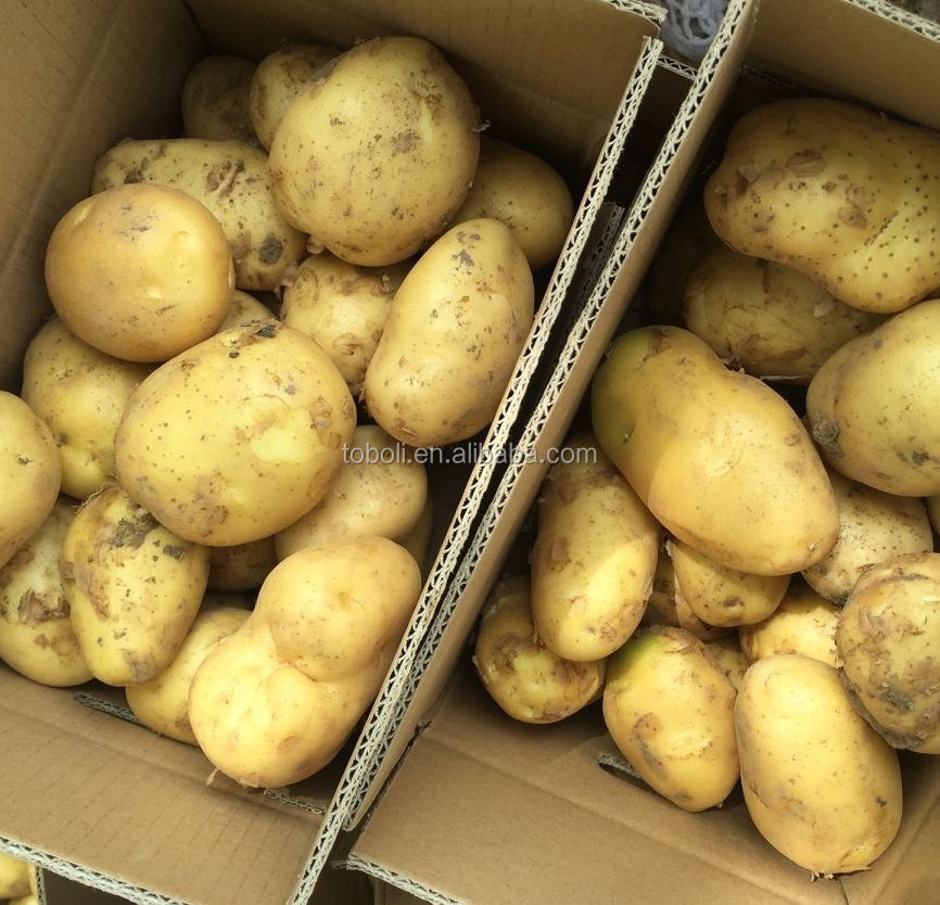 Atlantic potato and seed potatoes for sale holland
