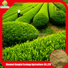 Chinese Green tea/Jasmine Green Tea Powder/Polyphenol/EGCG Extract Provided by ISO Certificated Manufacture