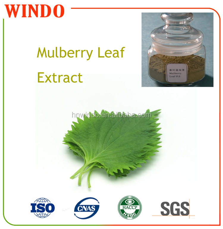 Natural Herbal Extract Folium Mori Mulberry Extract Powder/Morus alba L. Extract Mulberry Powder/Dried Fine Mulberry Extract Pow