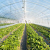 Low Cost Tropical Agricultural Greenhouse For