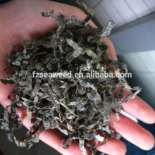 Hot sale in Russia Dry Cut Laminaria,Sun Dried shredded Laminaria