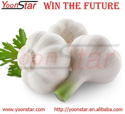 2016 New Fresh China Garlic for Sale with Good Quality
