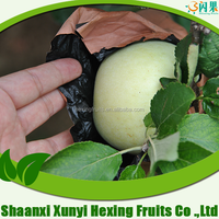 Common Cultivation Type and Fresh Style bulk fresh green apples