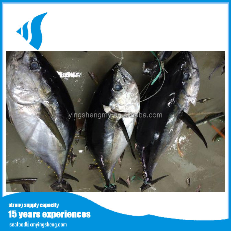 Frozen seafood big eye tuna for sale