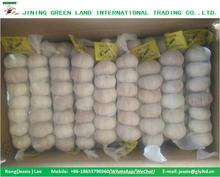 NEW CROP PURPLE GARLIC WHITE GARLIC TO ALGERIA FOR SALE