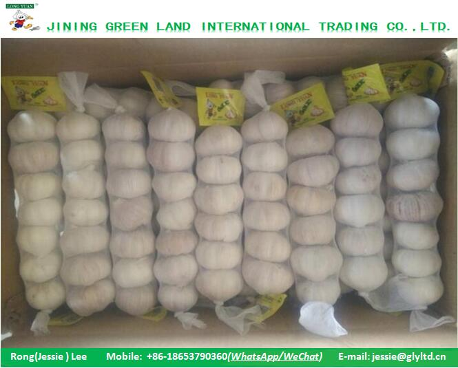 New Crop Purple Garlic White Garlic to Algeria