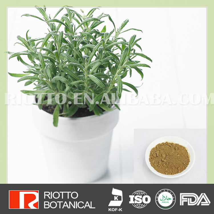 Top quality 100% pure organic rosemary extract carnosic acid 50%