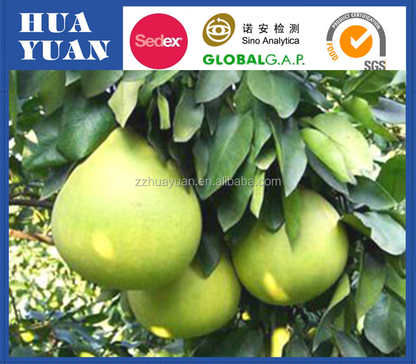 Chinese Fresh Fruit Shaddock Pomelo