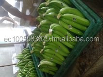 BANANAS CAVENDISH, Delicious fruit for you!!
