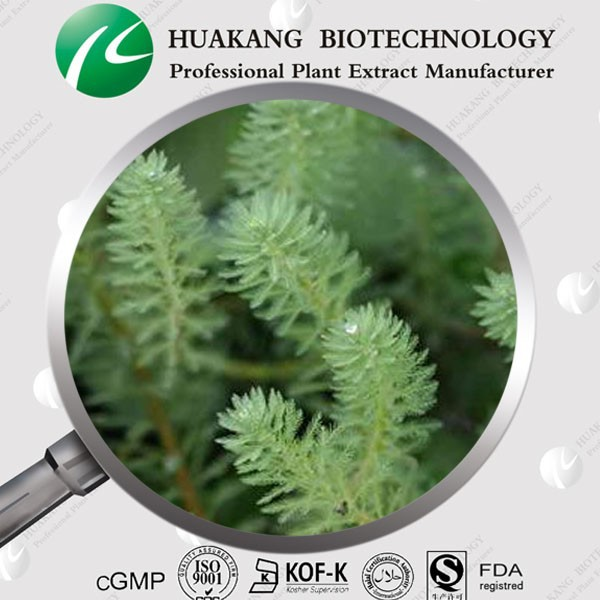high quality 5% Fucoxanthin Seaweed Extract