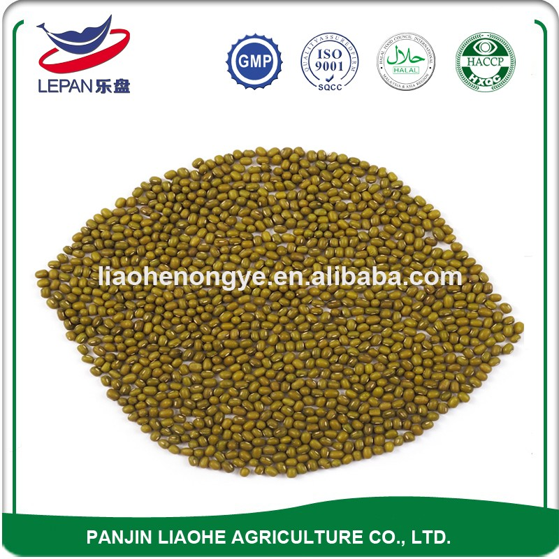 Grade A High Quality Hot Sale Fresh Green Beans Competitive Price