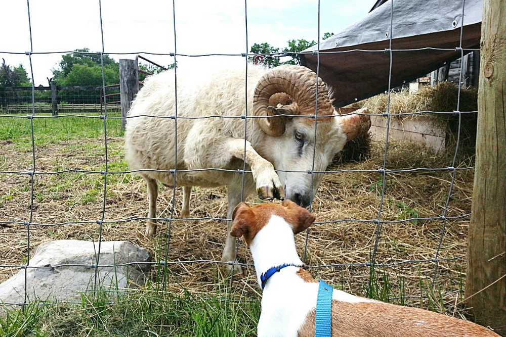 1.2m high Galvanized cattle field fence / sheep fence / animal wire mesh fence for livestock farm
